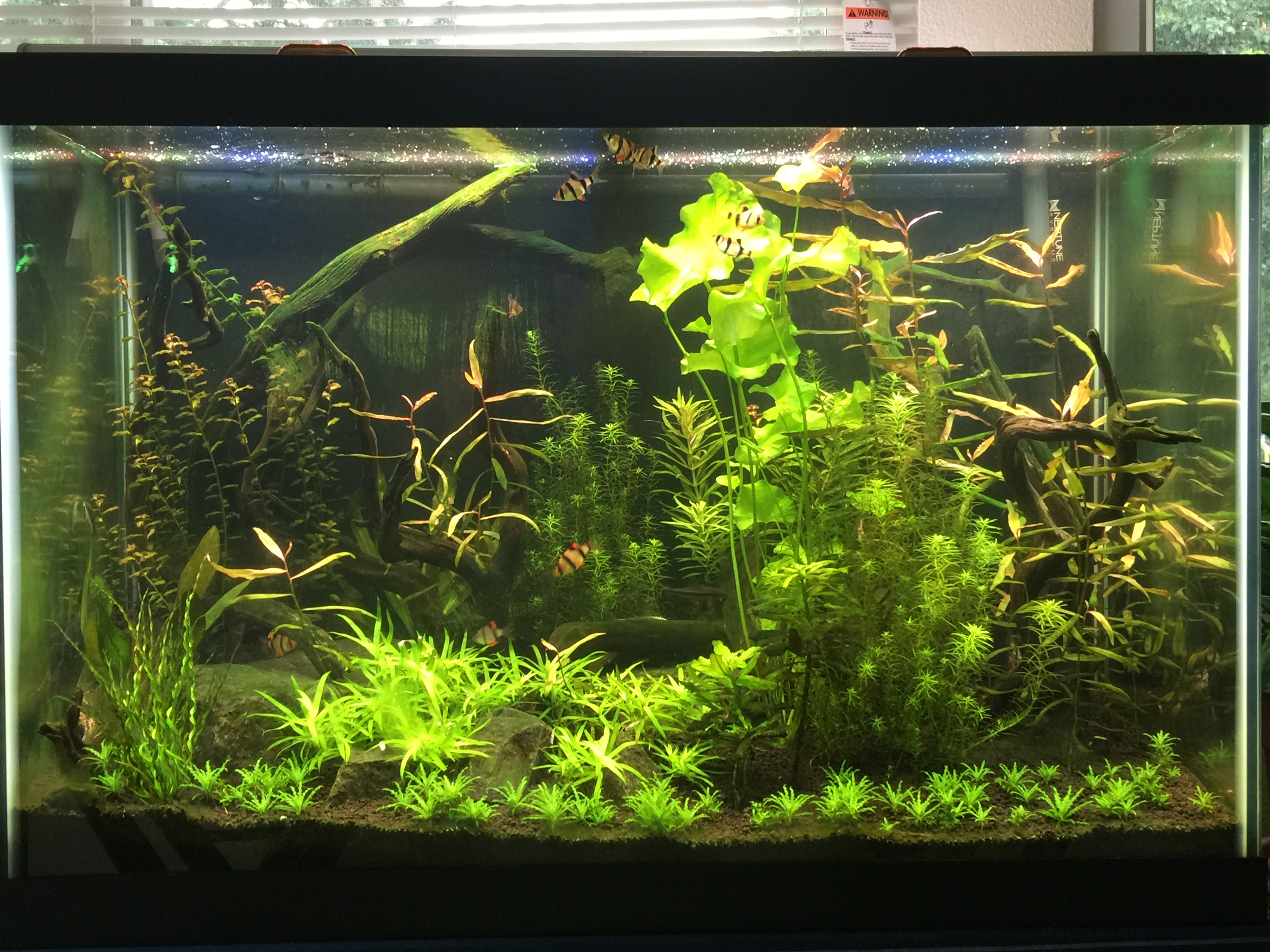 65 gallon aquarium | Lucas Roode – Nature Stuff