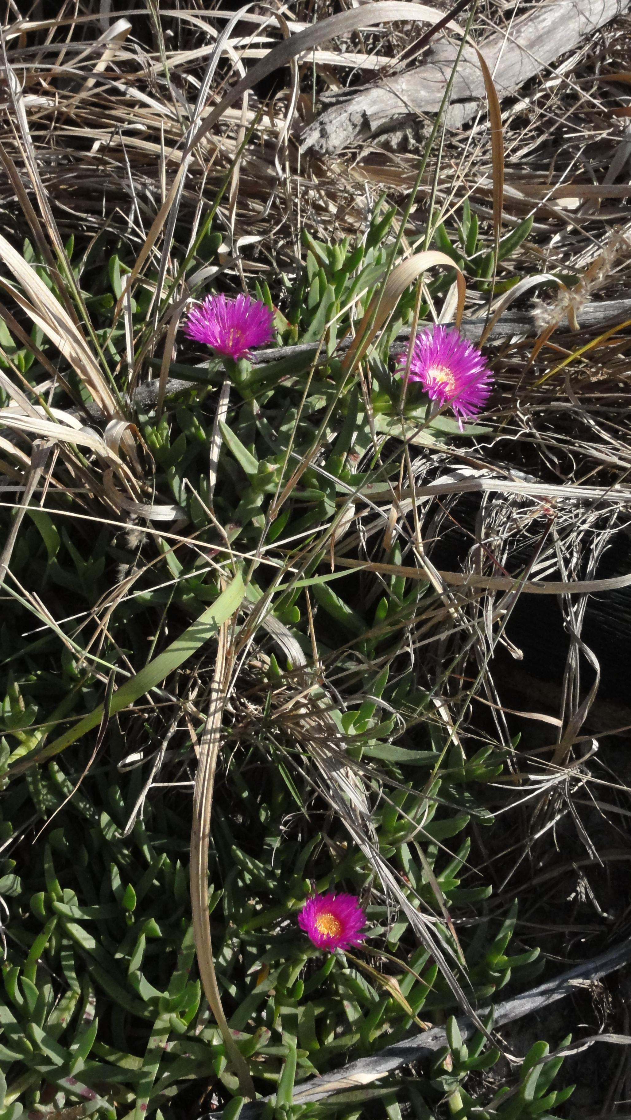 Purple_Flower_4