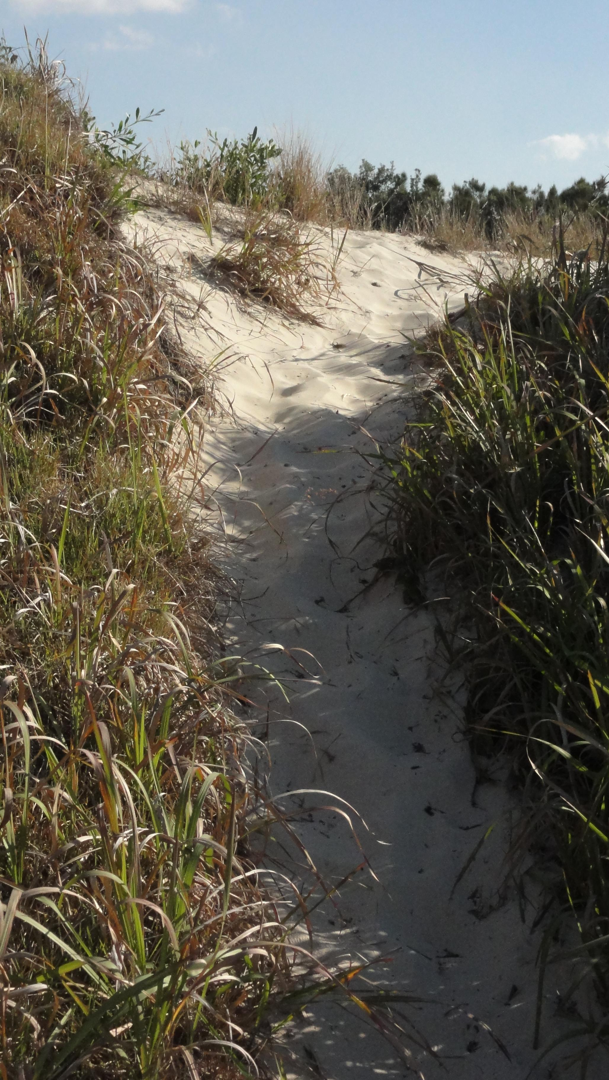 Sand_Dune_Path