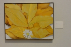 Yellow_Hickory_Leaves_with_Daisy