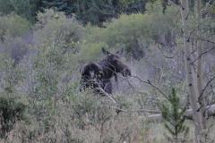 Prior_to_hiking_-_Moose4